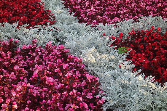 Bute Park Pink Flowers.jpg
