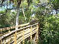 CNS Turtle Mound boardwalk02.jpg