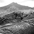 COLLECTIE TROPENMUSEUM Sawah's aan de bovenloop van de Tjitarum bij Tjikitu TMnr 10011096.jpg