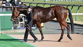 Cafe Pharoah Japanese Thoroughbred racehorse