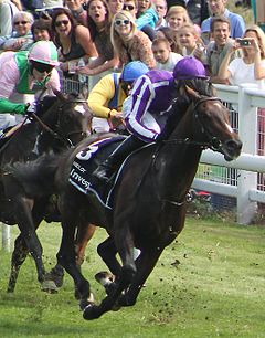 Camelot at 2012 Epsom Derby.jpg