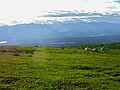 Camping along Kesugi Ridge.jpg
