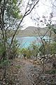 Caneel Bay Turtle Point Trail 1.jpg