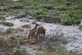 Cape Le Grand National Park, Western Australia 44.jpg