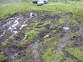 Carex aborigninum site being destroyed by 4-wheeling in meadow in SW Idaho.jpg