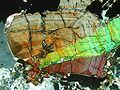 Cassiterite prebuz.jpg