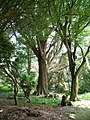 Castle Kennedy Garden - geograph.org.uk - 1565374.jpg