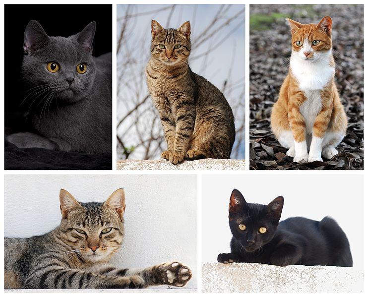 File:Cat poster 2.jpg