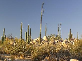 Cataviña - Beautiful boulders and cactus in Catavina, Baja