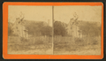 Century plant in blossom, from Robert N. Dennis collection of stereoscopic views.png