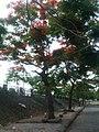 Chân Cầu Rào 1 - panoramio.jpg