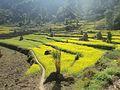 Chalise, Majhuwa 45900, Nepal - panoramio (4).jpg