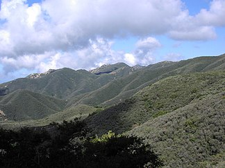 Chaparral in den Santa Ynez Mountains