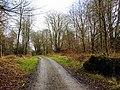 Charcoal Burners Road, Savernake looking east - geograph.org.uk - 345676.jpg