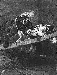 Een haan en enige kippen worden door een vos opgeschrikt