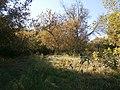 Cherkas'kyi district, Cherkas'ka oblast, Ukraine - panoramio - юра запеченко (155).jpg