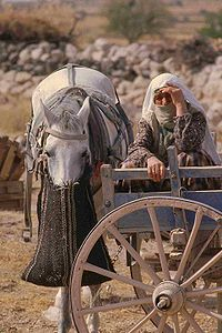 A Horse With Bag Feeder During The Harvest In Cadocia Turkey