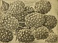 Childs' rare flowers, vegetables and fruits (1917) (19987412703).jpg