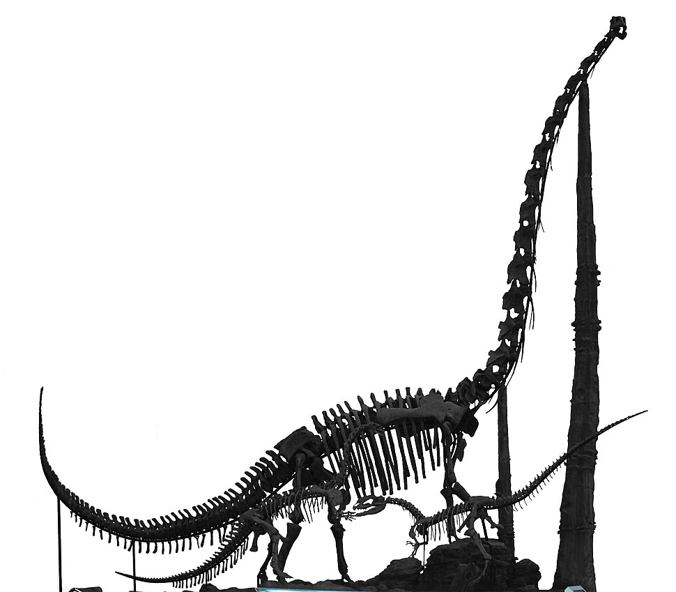 Chuanjiesaurus fossil in China Science and Technology Museum