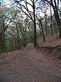 Chuchelský háj, lesní cesta.jpg