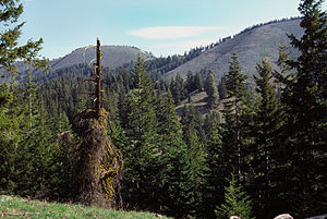 Entiat Mountains - Image: Chumstick Mountain Summit from Primitive Access Road