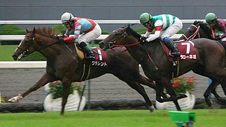 Daily Hai Nisai Stakes - 2011 Daily Hai Nisai Stakes