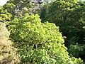 Cleghorn Glen 20 June 2010 (111).JPG