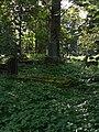 Cmentarz Prawosławny w Suwałkach (67).JPG