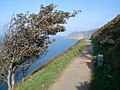Coast path on Hollerday Hill - geograph.org.uk - 560562.jpg