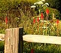Coastal Weeds (229962269).jpg