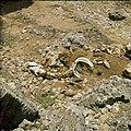 Collectie Nationaal Museum van Wereldculturen TM-20029620 Skelet van een dier Aruba Boy Lawson (Fotograaf).jpg