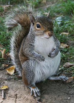 A squirrel in Washington, DC.