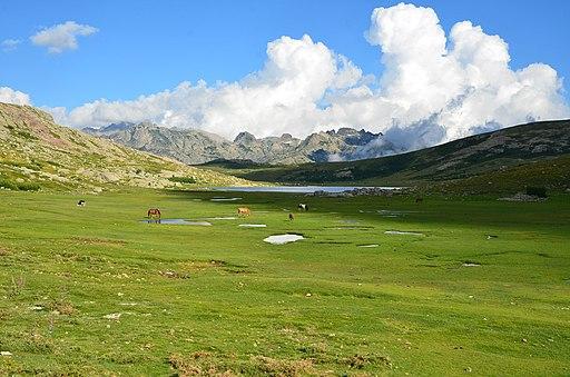 Corsica - Nino