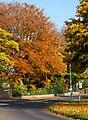 Cottingham IMG 7975 - panoramio.jpg