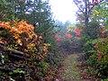 Cove-mtn-trail-tn2.jpg