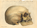 Crania-Americana.png