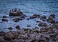 Crimea (37381372446).jpg