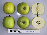 Cross section of Cretesc de Breaza, National Fruit Collection (acc. 1958-100).jpg