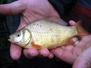 Angling records in the United Kingdom