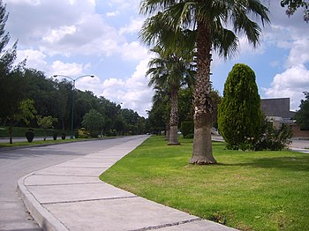 Cruz Azul Avenue