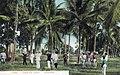 Cuba - Cocoteros.jpg