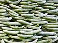 Cucumis - Snake cucumbers 01.jpg