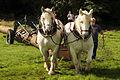 Débardage JEAN BAPTISTE RICARD mondial du cheval percheron 2011Cl J Weber12 (24083485255).jpg