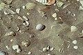 DOC Fairy Tern photos 16.jpg