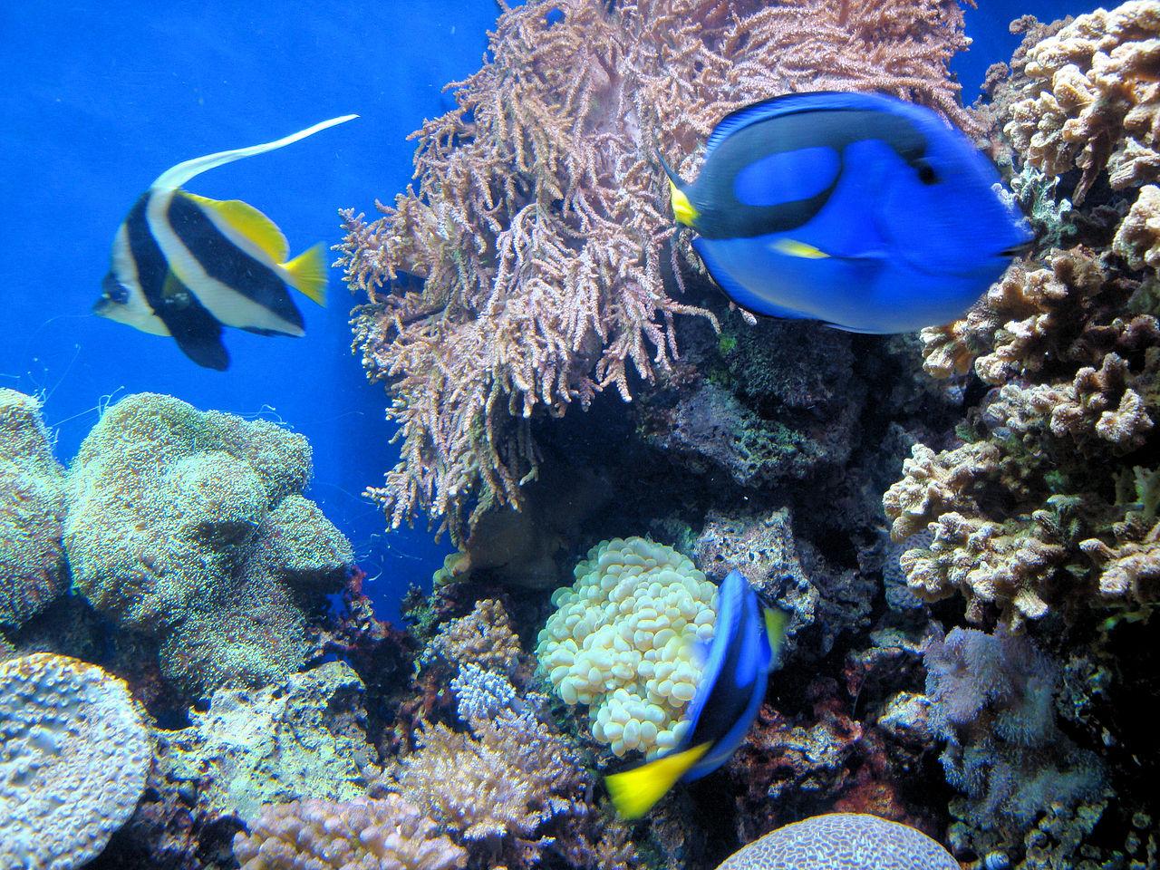 File dsc26587 monterey bay aquarium california usa for Aquarium original poisson rouge