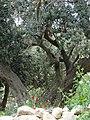 Dana bioreserve - panoramio (7).jpg