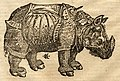 David Kandel - Rhinoceros.jpeg