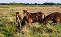 Delleboersterheide – Catspoele Natuurgebied van It Fryske Gea. Wandeling over de Delleboersterheide 08.jpg