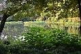 Dense bush, shade and water- a great combination (35777274084).jpg