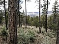 Derrick Trail, Payson, Arizona - panoramio (10).jpg